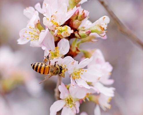 Werner, Blühpate, Bienen